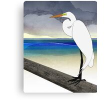 American Great Egret Canvas Print