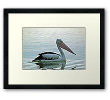The Australian Pelican Framed Print
