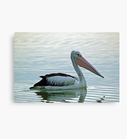 The Australian Pelican Canvas Print