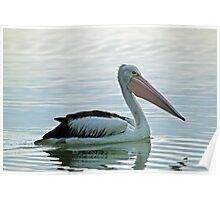 The Australian Pelican Poster