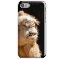 Close up of a head of a camel on black background facing camera iPhone Case/Skin