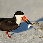 Black Skimmer 2:Mom and chick both have fish!  by jozi1