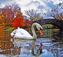 White Swan Under Bridge by printsforwalls