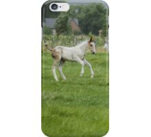 Playful colt  iPhone Case/Skin