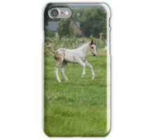 Playful colt  iPhone Case/Skin