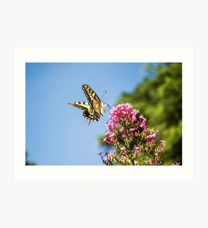 Beautiful White and Black Butterfly Art Print