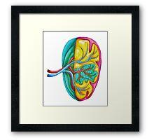 Colorful spleen Framed Print