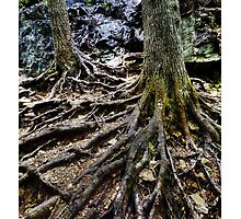 Roots and Trees by Tim McGuire
