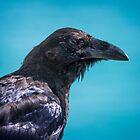 Raven at Kluane Lake by Yukondick