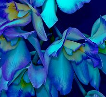 ORCHIDS  - 16 by Thomas Barker-Detwiler