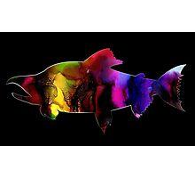 Multi-Colored Salmon Photographic Print