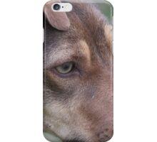 Bally: A Working Dog iPhone Case/Skin