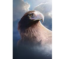 Wedge Tail Eagle Photographic Print