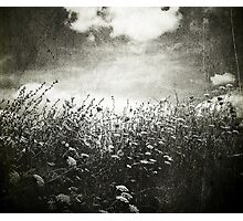 Counting Flowers Like They Were Stars Photographic Print