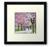 Edinburgh Meadows (Spring Blossom) Scotland Framed Print