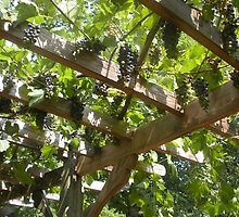 Grapevine by ansleyhphillips