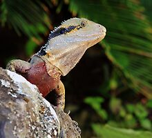 Australian Water Dragon by Ann  Van Breemen