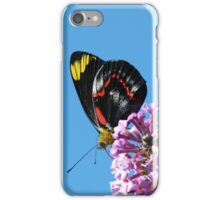 Common (Black) Jezebel, Delias nigrina 2 iPhone Case/Skin