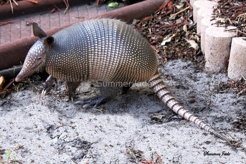 What's THIS in the Yard?  Helllloo, Armadillo!!   by SummerJade