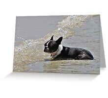 Cooling off! Greeting Card