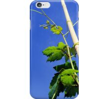 young grape vines in a Vineyard,  iPhone Case/Skin