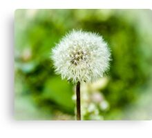 Puff Ball Canvas Print