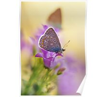 Morning impression with two butterflies Poster