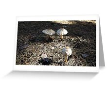 Natural Mushrooms Greeting Card