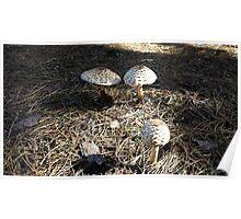 Natural Mushrooms Poster