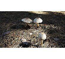Natural Mushrooms Photographic Print
