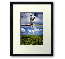 Zelda, RHOA, RHEXAJ: From Rescued Dog To Agility Champion Framed Print