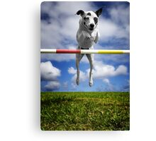 Zelda, RHOA, RHEXAJ: From Rescued Dog To Agility Champion Canvas Print