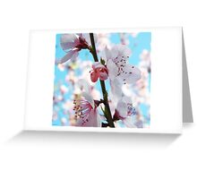 Peach Blossom Time Greeting Card