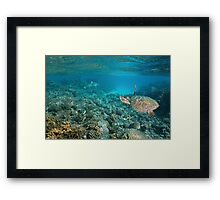 Sea turtle underwater coral reef Pacific ocean Framed Print
