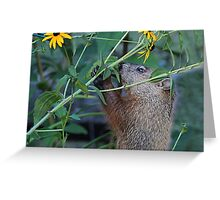 Please don't eat the flowers Greeting Card