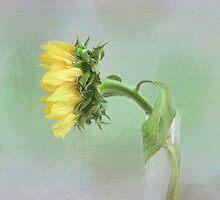 Sunflower in Profile by LouiseK