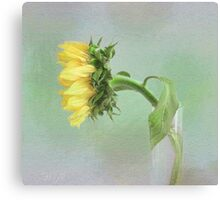 Sunflower in Profile Canvas Print