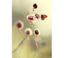 Impression in pastel colours Photographic Print
