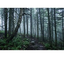 Forest in Mont Tremblant National Park Photographic Print