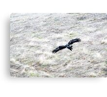 Wedge Tailed Eagle Canvas Print