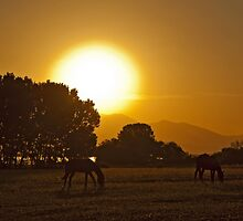 Sunrise in the fields by Konstantinos Arvanitopoulos