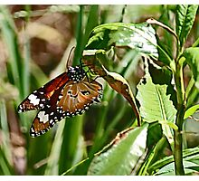 Beneath a Beaut Butterfly Photographic Print