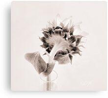 Portrait of a Sunflower  Canvas Print