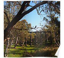 The Kookaburra sits in the old gum tree, Pyalong Vic Australia Poster