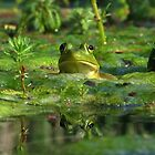 Frog by photodug