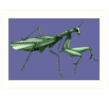 Praying Mantis Art Print