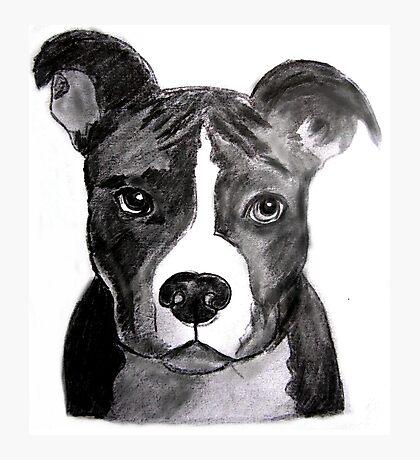 Good Dog Pit Bull Photographic Print