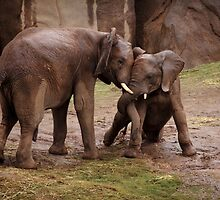 Elephants: Helping Trunk by Daniela Pintimalli