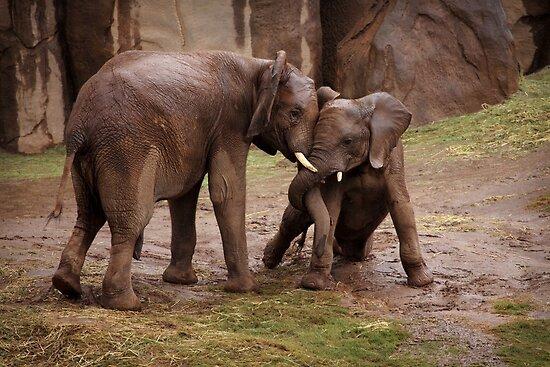 Elephants: Helping Trunk by Daniela Pintimalli