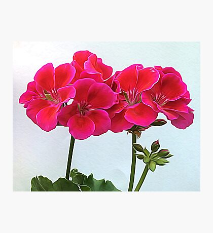 Geranium Bouquet Photographic Print
